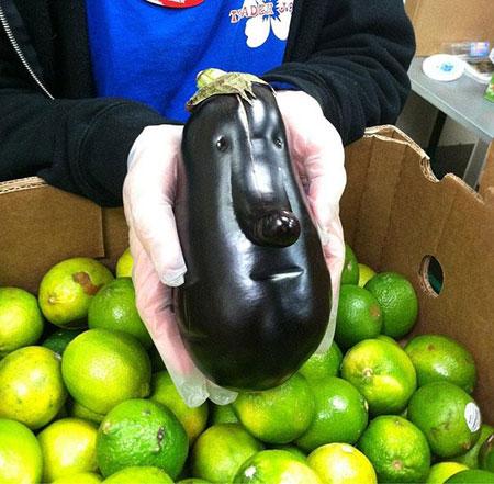 عکس میوه های بی ادب،عکس های جالب از میوه ها